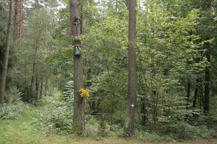 Krzyz w Lesie Antoniuk