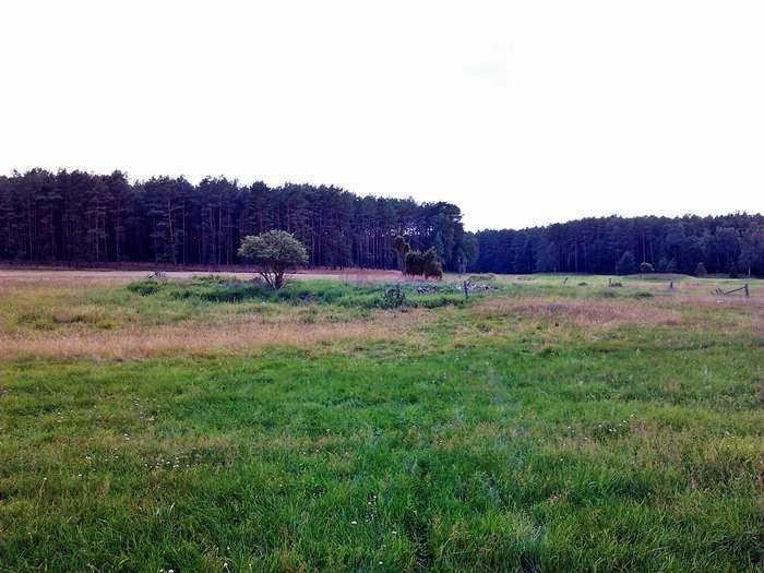 Magiczna łąka - ruiny.