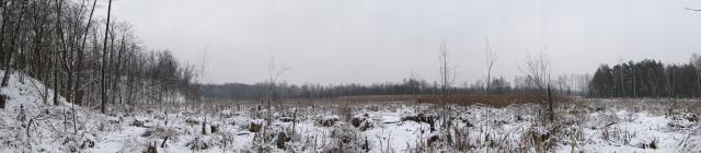 [MIAU] Leśny punkt widokowy
