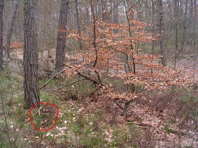 Leśny wypad 2