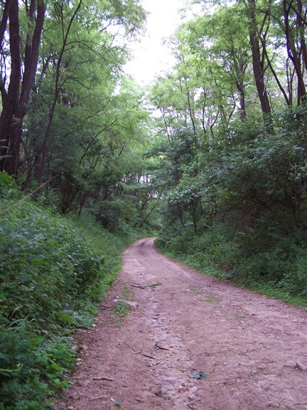 Wąwóz obok doliny Kamionki