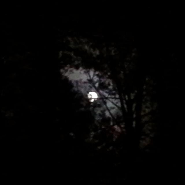 Osiedle Wilga - W blasku Księżyca