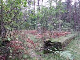 Leśny cmentarz epidemiczny