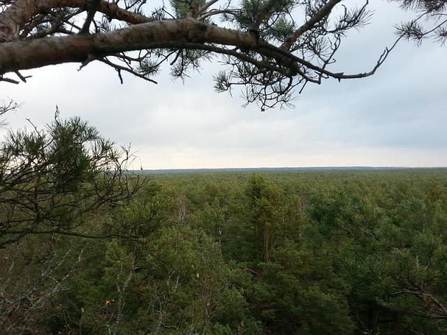 Osiedle Wilga - Tylko dla Orłów