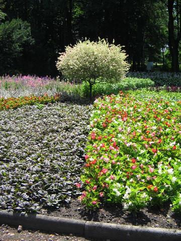 Ogród Botaniczny - Zabrze 1